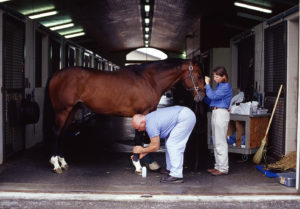 Game Ready Horse with Musculoskeletal Injury
